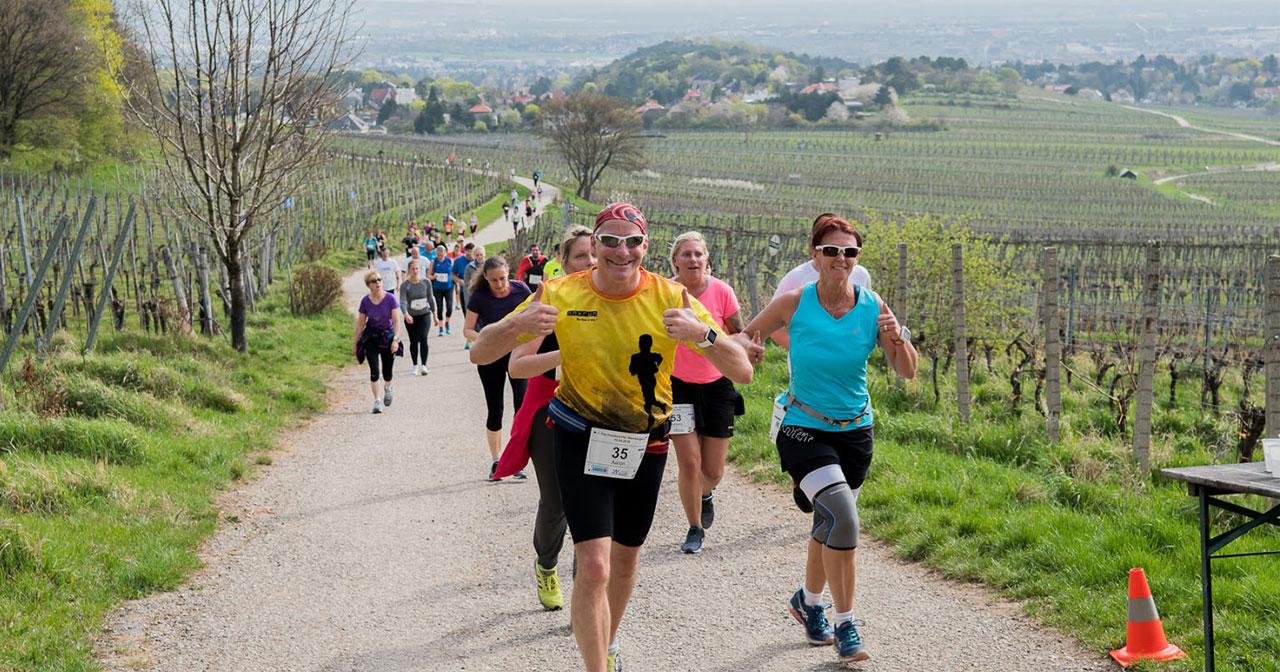 Laufstrecke durch die Weinberge beim Perchtoldsdorfer Weinberglauf